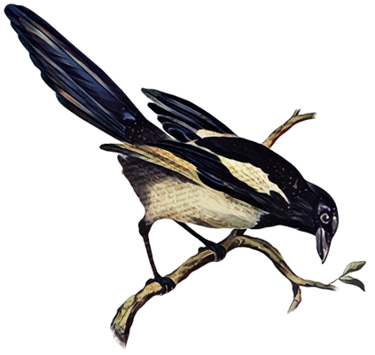 MAGPIE_04_03.png